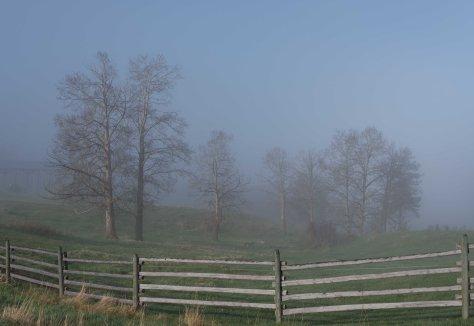 A Morning at Burnt Ridge Ranch  - ©Derek Chambers