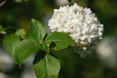 Blossoms - Bibury Court Hotel Garden - England - ©Derek Chambers