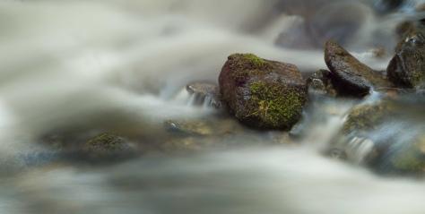 Steadfast, Eakin Creek - ©Derek Chambers