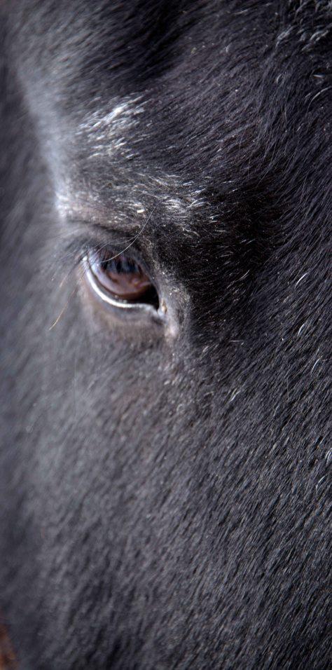Gentle Eye - ©Derek Chambers