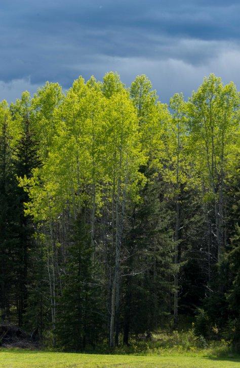 Green and Darker - ©Derek Chambers