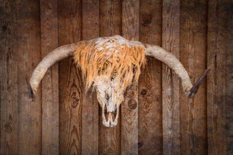 Highland Skull - ©Derek Chambers