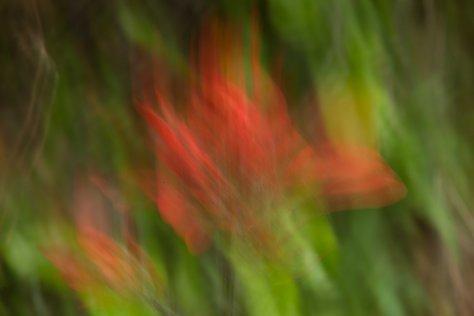 Indian Paintbrush Impression (ICM) - ©Derek Chambers