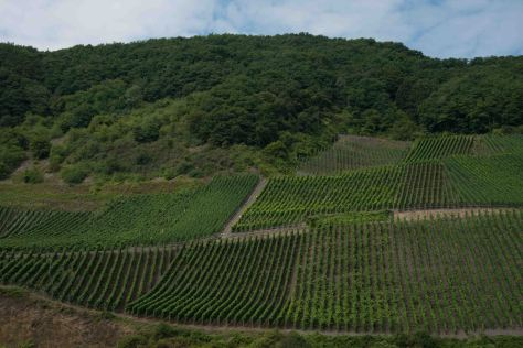 Middle Rhine - Vineyards - ©Derek Chambers