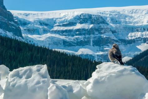 Like My View? Jasper-Banff Parkway - ©Derek Chambers