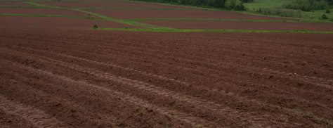 PEI Potato Fields - ©Derek Chambers
