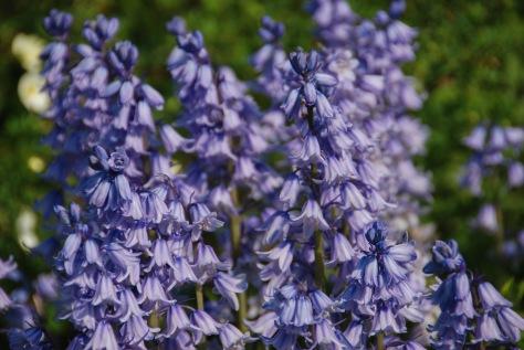 Spring Display - Bibury Court Hotel Garden - England - ©Derek Chambers