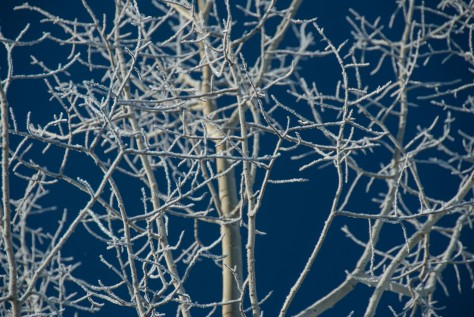 Winter Aspen Wearing White - ©Derek Chambers