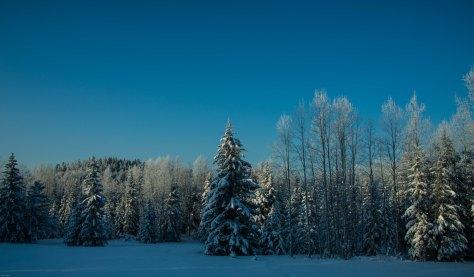 Winter Morning - Eagleridge - ©Derek Chambers