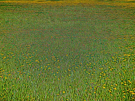 20140602-DSCN0065 The Field - ©Derek Chambers