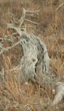 Ghostly Skeleton (4451) - ©Derek Chambers