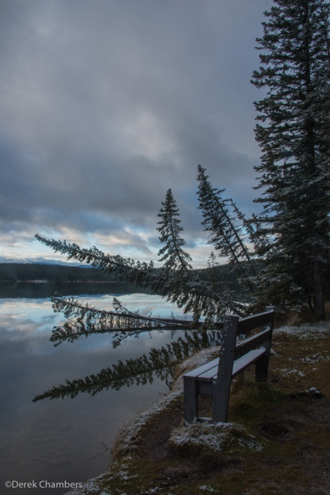 A Confusion of Trees At Fish Lake - ©Derek Chambers