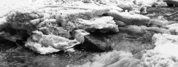 Windstorm Outcome - _DSC4954- ©Derek Chambers
