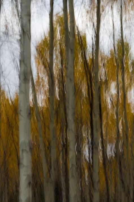 Autumn Impressions 4- ©Derek Chambers
