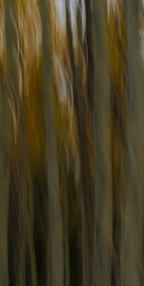 Autumn Impressions 2 - ©Derek Chambers