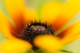 Macro Creeping Through The Flowers - ©Derek Chambers