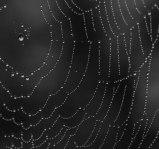 Pearls Found In The Vienna Woods - ©Derek Chambers