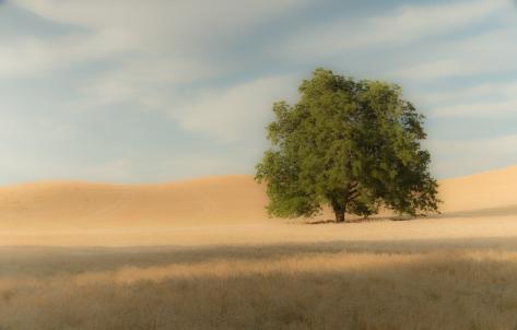 Simplify - Palouse  _DSC7787- ©Derek Chambers