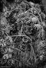 Tone and Texture - ©Derek Chambers