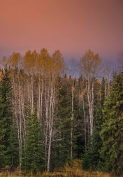 October Dawn At Eagleridge - ©Derek Chambers