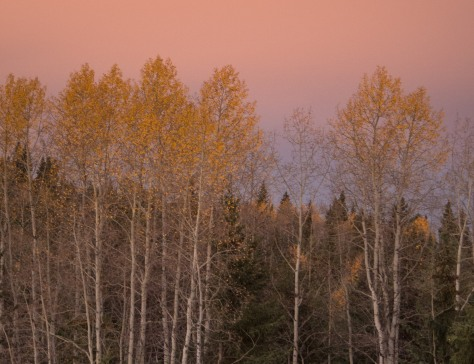 October Trees - Dawn at Eagleridge - ©Derek Chambers
