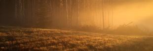 Misty Fall Morning - Eagleridge - ©Derek Chambers