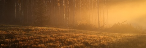 Misty Fall Morning - Eagleridge - ©Derek Chambers