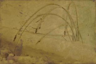 Frozen Grasses in the Snow - Variation - ©Derek Chambers