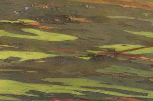 2016 03 19 Eucalyptus Bark Landscape - ©Derek Chambers