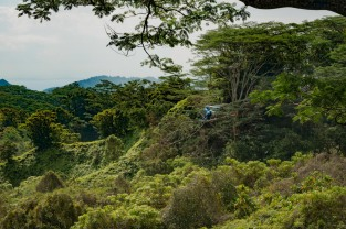 2016 03 23 Helicopter or Dragon Fly? Kuilau Ridge Trail - ©Derek Chambers