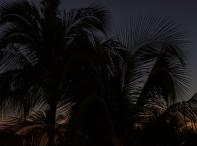 Evening Palm Fronds _DSC5084- ©Derek Chambers