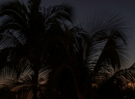 Evening Palm Fronds _DSC5084- ©Derek Chambers