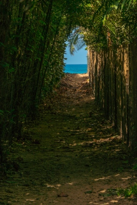 Pathway to Paradise _DSC5125- ©Derek Chambers