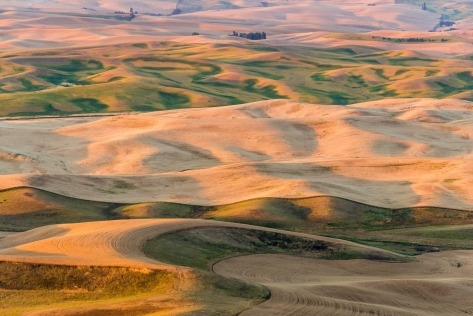 Early Morning - Palouse - ©Derek Chambers