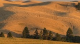Evening Draws On - Palouse - ©Derek Chambers