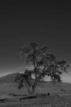 Lone Tree and Steptoe - Palouse - ©Derek Chambers
