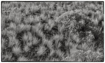Bunch Grass and Sage Bush - ©Derek Chambers
