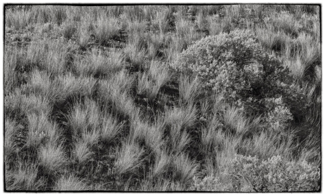 Bunch Grass and Sage Bush - ©Derek Chambers