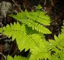 Spring Growth, Eakin Creek Canyon Provincial Park _DSC1603-1371- ©Derek Chambers