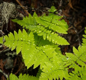 Spring Growth, Eakin Creek Canyon Provincial Park _DSC1603-1371- ©Derek Chambers