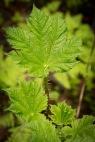 Spring Growth , Eakin Creek Canyon Provincial Park _DSC1608- ©Derek Chambers