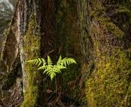 Spring Grwoth , Eakin Creek Canyon Provincial Park _DSC1626- ©Derek Chambers