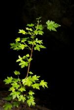 Spring Growth, Eakin Creek Canyon Provincial Park _DSC1631- ©Derek Chambers