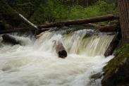 Log Jam, Eakin Creek Canyon Provincial Park _DSC1643-1369- ©Derek Chambers